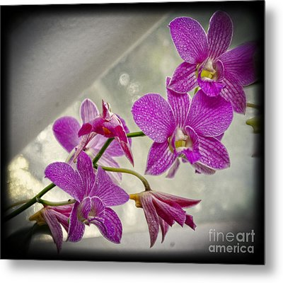 Dark Pink Orchids All In A Row Metal Print