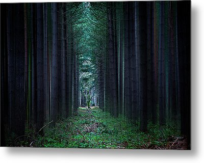 Dark Side Of Forest Metal Print by Svetlana Sewell