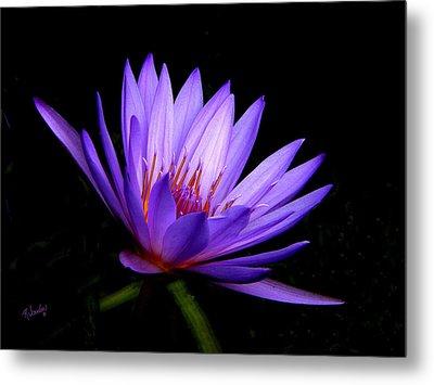 Dark Side Of The Purple Water Lily Metal Print by Rosalie Scanlon