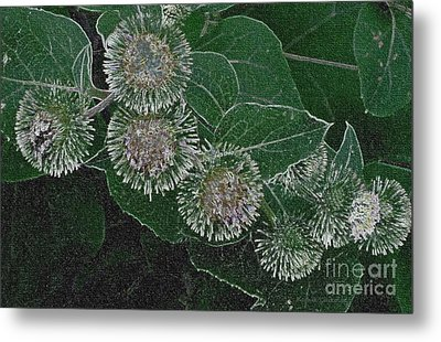 Metal Print featuring the photograph Dark Thistles by Kathie Chicoine
