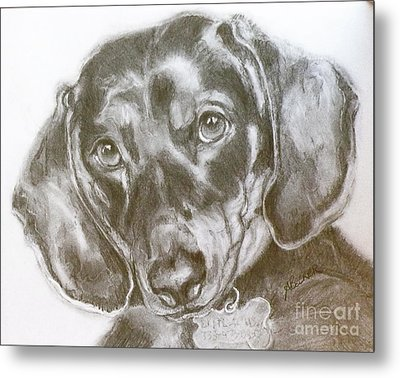Daschund Pencil Drawing Metal Print