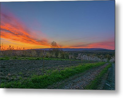 Dawn At Roe Orchards I Metal Print by Angelo Marcialis