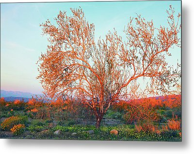 Metal Print featuring the photograph Dawn's First Light At Joshua Tree National Park by Ram Vasudev