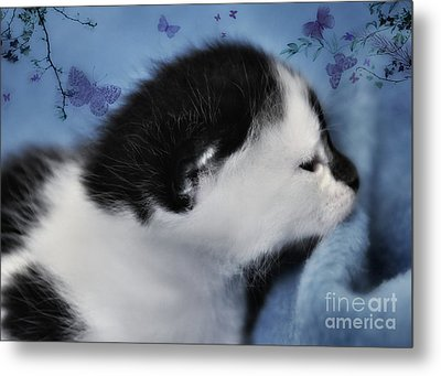 Day Dreaming Metal Print by Elaine Manley