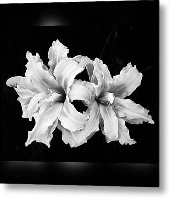 Day Lilies #noir #iphoneonly #iphone6 Metal Print by Joan McCool