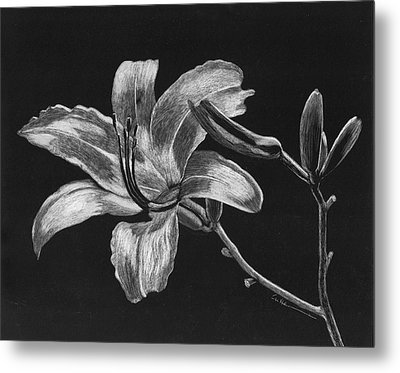 Day Lily Metal Print by Diane Cutter