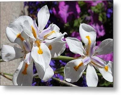 Metal Print featuring the photograph Day Lily by M Diane Bonaparte