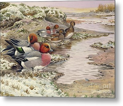 Daybreak On The Washes  Wigeon Metal Print by Carl Donner