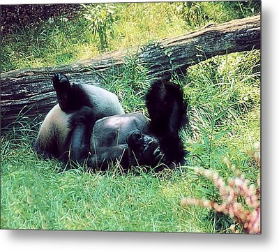 Daydream Believer Metal Print by Jan Amiss Photography