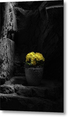 Metal Print featuring the photograph Daylight Delight by Tom Mc Nemar