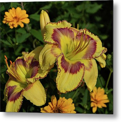Metal Print featuring the photograph Daylilies And Zinnia by Sandy Keeton