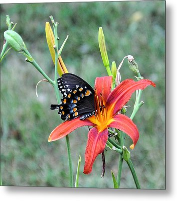 Daylily Delight 2 Metal Print