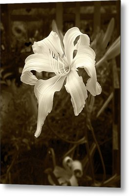 Metal Print featuring the photograph Daylily by John Hix