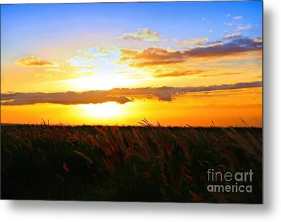 Metal Print featuring the photograph Day's End by DJ Florek