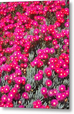 Dazzling Pink Flowers Metal Print by Mark Barclay