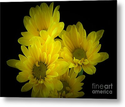 Dazzling Yellow Metal Print by Ray Shrewsberry