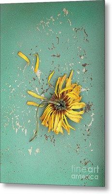 Metal Print featuring the photograph Dead Suflower by Jill Battaglia