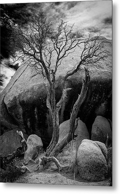 Dead Tree And Boulder At Joshua Tree Metal Print
