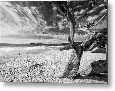Dead Tree On The Beach Metal Print by George Oze