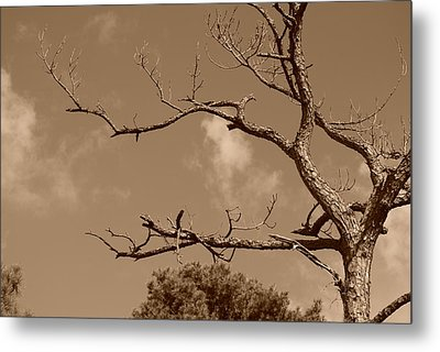 Metal Print featuring the photograph Dead Wood by Rob Hans