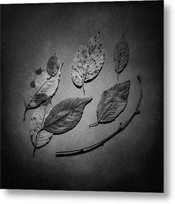 Decaying Leaves Metal Print by Tom Mc Nemar