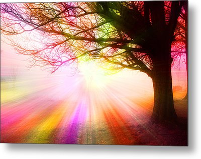 December Fog By The Sleepy Pin Oak Rainbow Burst Metal Print by Thomas Woolworth