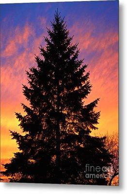 December Sunset Metal Print by Mark Miller