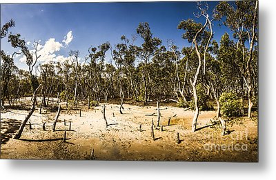 Deception Bay Conservation Park Metal Print by Jorgo Photography - Wall Art Gallery