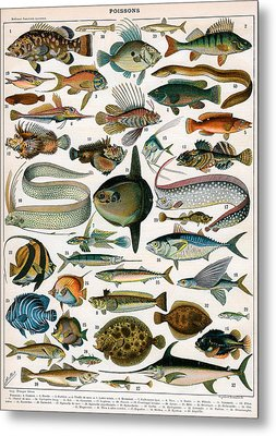 Decorative Print Of Poissons By Demoulin Metal Print