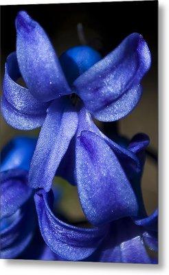 Deep Blue Flower Metal Print by Svetlana Sewell