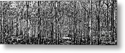 Deep Forest Bw Metal Print by Az Jackson