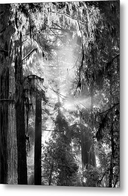 Deep Forest Light Metal Print