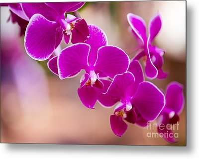 Deep Fuchsia Orchids  Metal Print by A New Focus Photography
