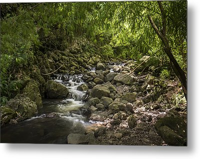 Deep In The Forest Metal Print by Jon Glaser