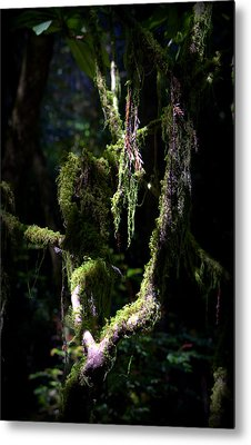 Metal Print featuring the photograph Deep In The Forest by Lori Seaman