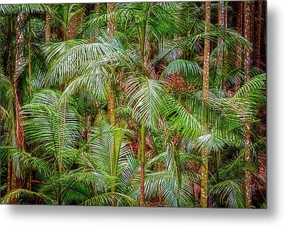 Deep In The Forest, Tamborine Mountain Metal Print