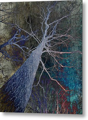 Deep In The Woods Metal Print by Marianna Mills - Anthony Quinn