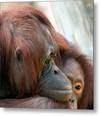 Deep In Thought Metal Print by Donna Proctor