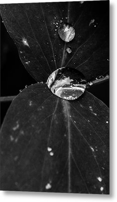 Metal Print featuring the photograph Deep Refraction Between Leaves by Darcy Michaelchuk