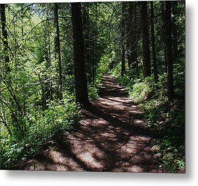 Metal Print featuring the photograph Deep Woods Road by Ben Upham III