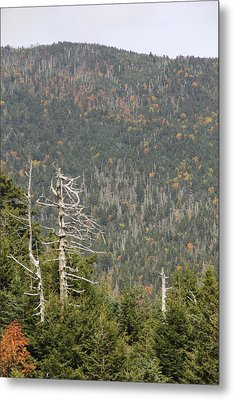 Deeper Into Forest Metal Print