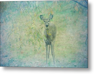 Deer Abby Metal Print by Bill Cannon