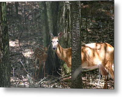 Deer And Fawn In The Woods Metal Print by David Bishop