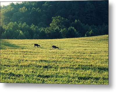 Deer At Dusk Metal Print by Laurie Perry