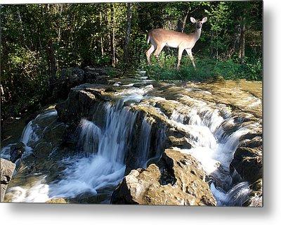 Deer At The Falls Metal Print by Rick Friedle