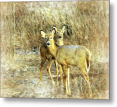 Deer Duo 6 Metal Print by Marty Koch