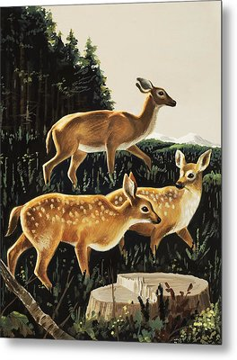 Deer In Forest Clearing Metal Print by English School