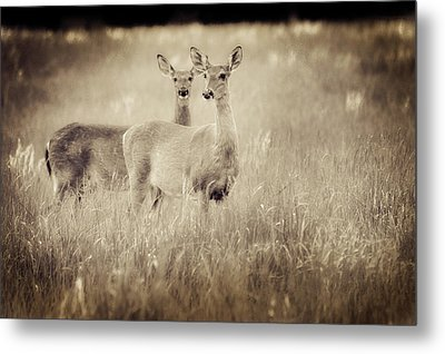 Deer In Sepia Metal Print