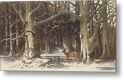 Deer In The Forest Metal Print by G Schneyder