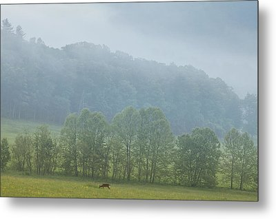 Deer In The Smokies Metal Print